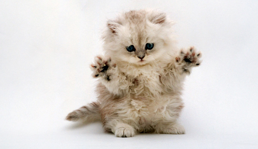 Collection-of-cute-baby-animal-wallpapers-16