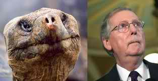 mcconnell_turtle