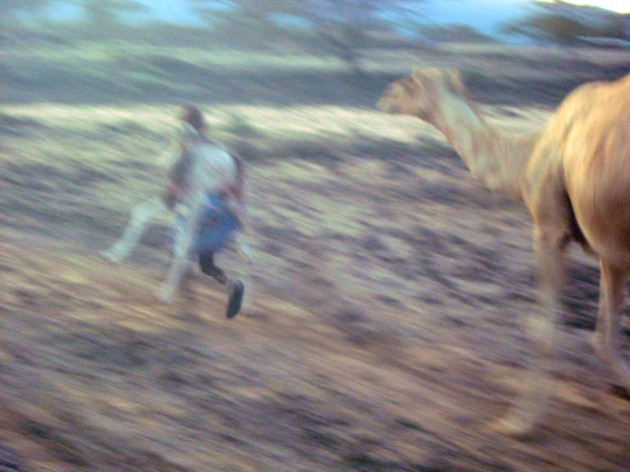 Sarah Palin (out of frame) camel chases an atheist holding a goat, or legal paperwork to abort Christ from Christmas.